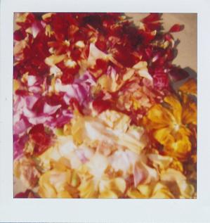 Petals_up_close_2