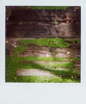 Moss_polaroid